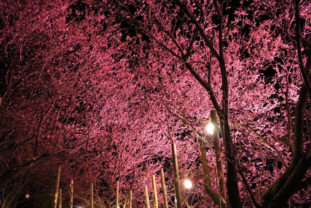 雪割桜キャンドルナイト